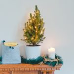 クリスマスツリーは猫が食べて危険?ポインセチアや電飾の感電対策まとめ
